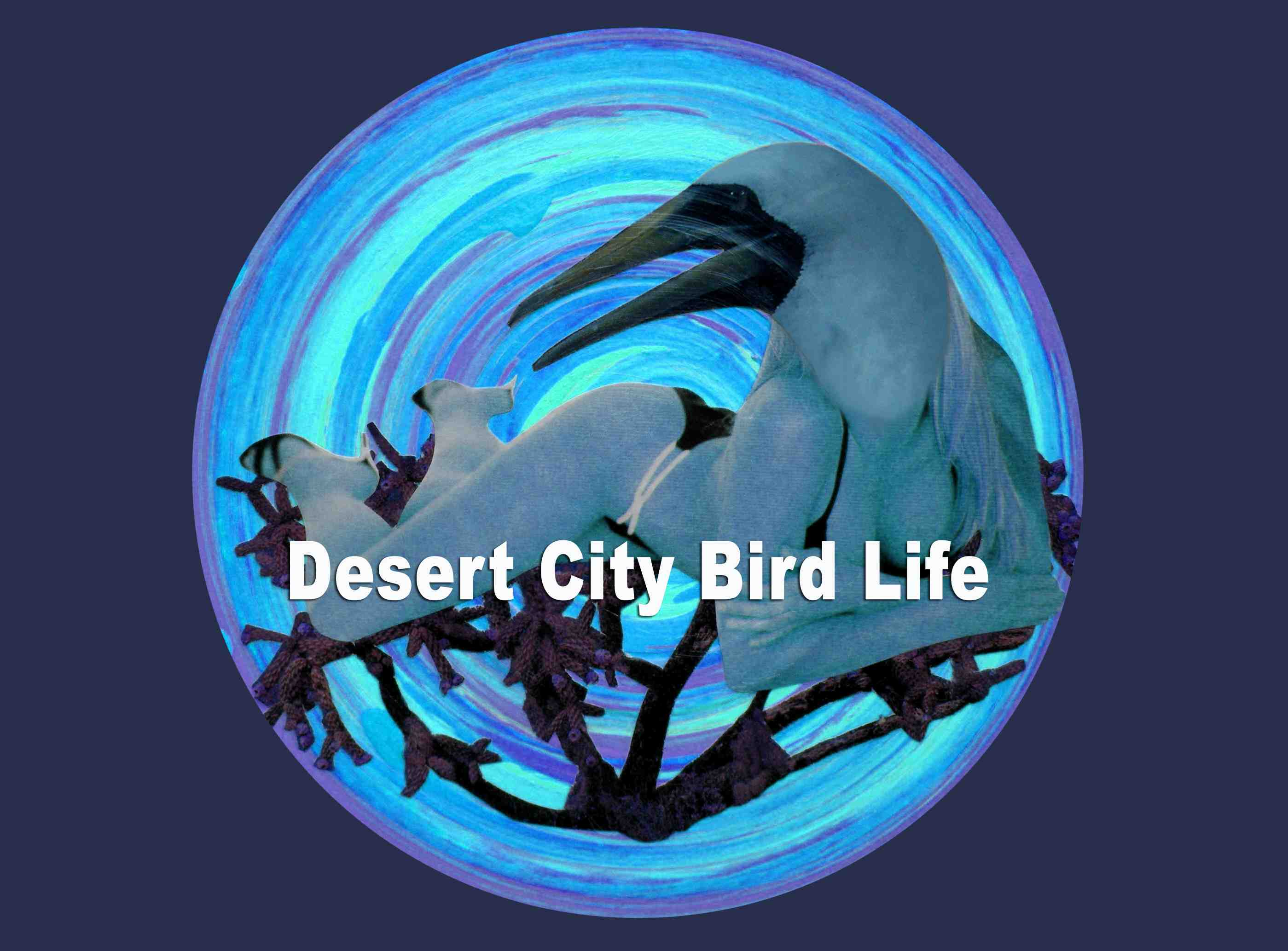Desert City Bird Life